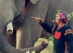 Ama Kông training an elephant