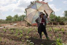 Hmong community garden