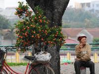 Hanoi vendor
